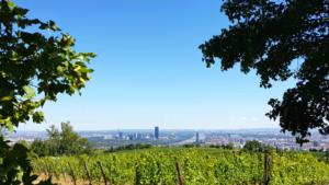 Венский винный день походов (Wiener Weinwandertag)